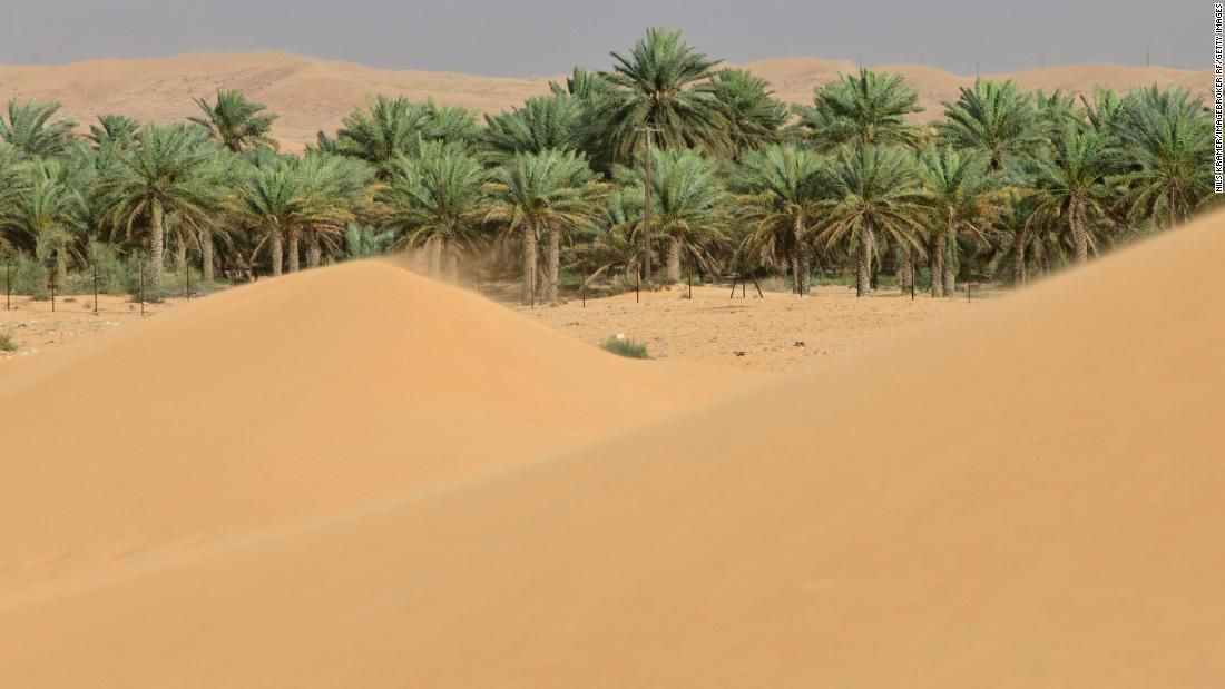 Date plants grown from 2,000-year-old seeds