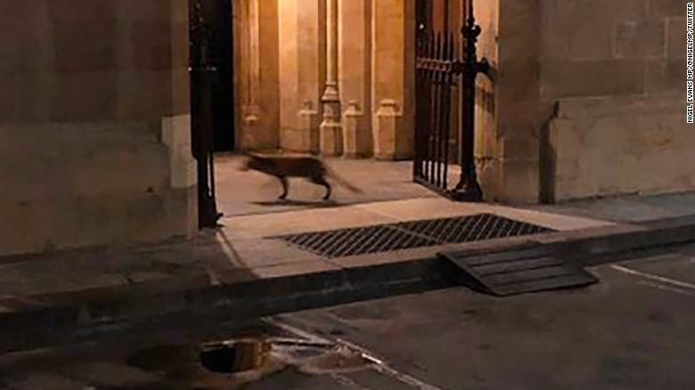 A fox was seen infiltrating the UK Parliament on Thursday night.