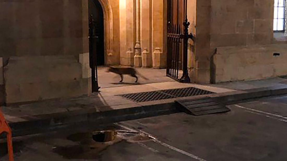 A fox sneaked into the British Parliament and caused mayhem