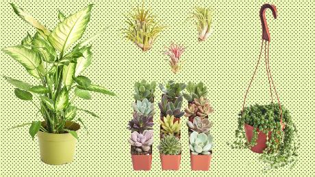 Succulent Sale Save On Houseplants From Amazon Cnn
