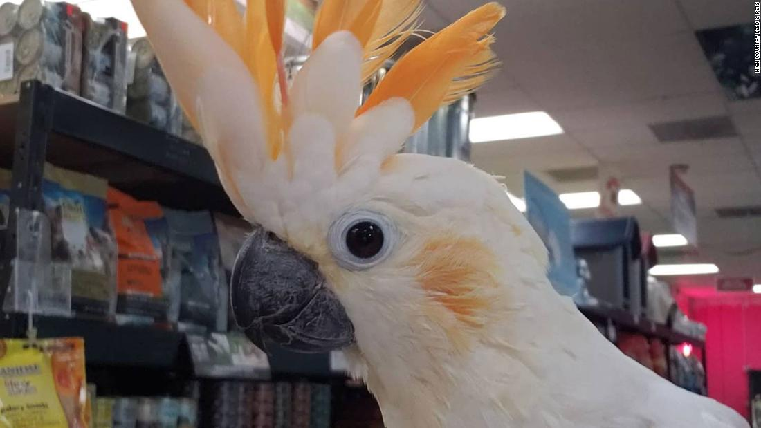 Two cockatoos worth $2,000 each were stolen from a California pet shop
