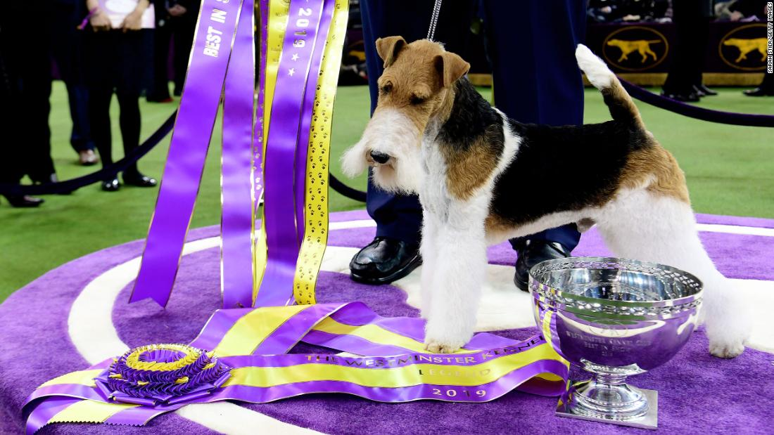 Dogs get ready to bow and wow at the Westminster dog show