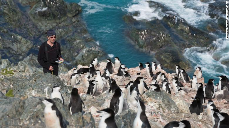 Scientist Steve Forrest, from Stony Brook University, counts chinstrap penguins from the top of a hill on Elephant Island.