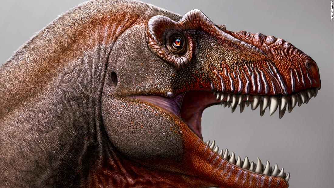 Farmer discovers new Tyrannosaur species, one of the oldest of its kind ever found - CNN