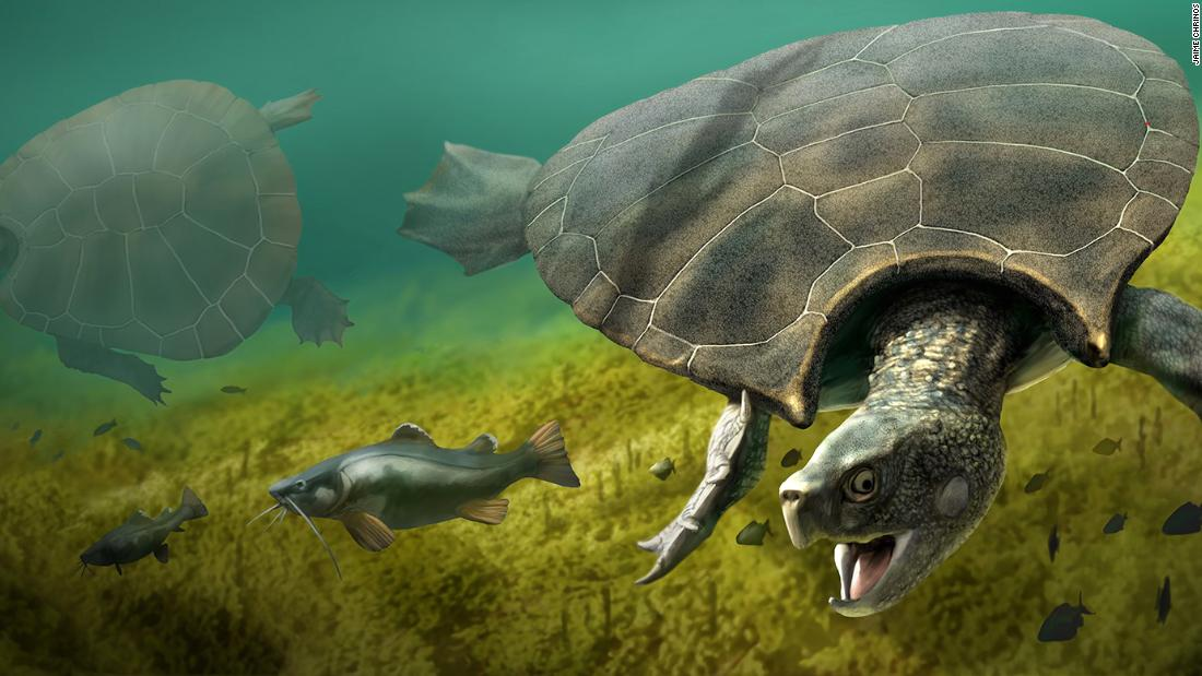 Biggest turtle that ever lived had 10 foot shell with horns - CNN