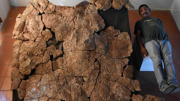 Venezuelan Palaeontologist Rodolfo Sánchez is shown next to a male carapace of the giant turtle Stupendemys geographicus, for scale.