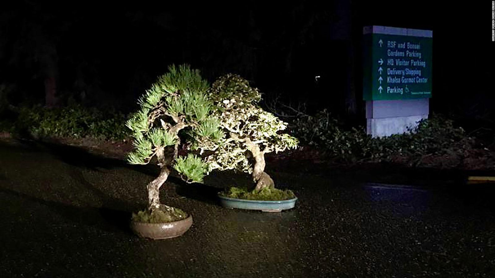 Two Bonsai Trees Are Back At A Museum Days After Being Stolen Cnn Travel