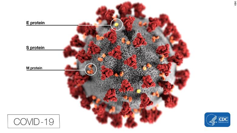 This illustration, created at the CDC, reveals the spikes that adorn the outer surface of the virus.