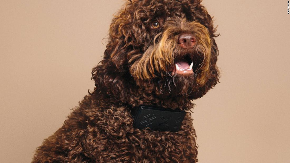 You can now buy a dog collar that will swear every time your dog barks