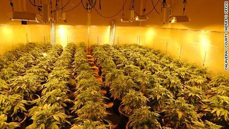 Authorities raided a marijuana grow house in West Point, California.