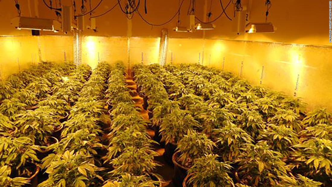 Police found more than 1,400 marijuana plants inside a building in Northern California