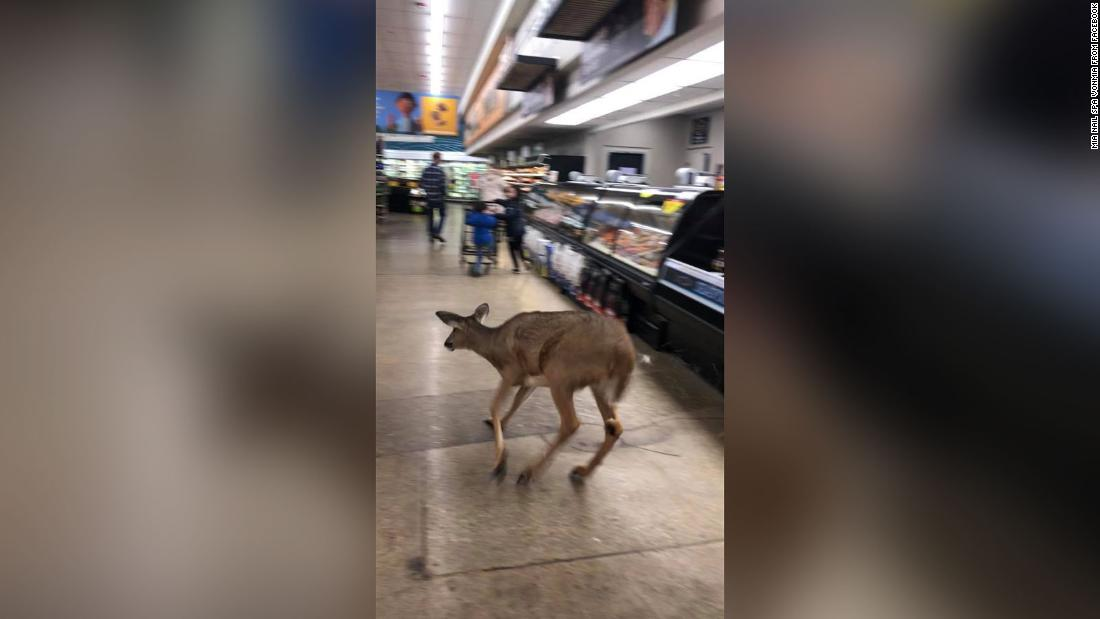 A deer bolts through a supermarket in Indiana