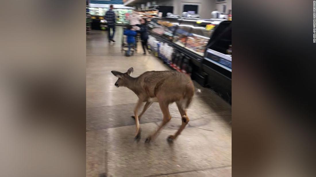 Rusa baut melalui sebuah supermarket di Indiana