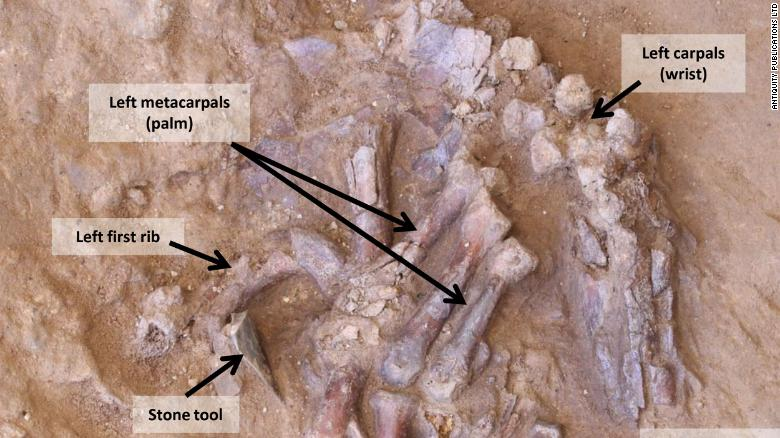 A labeled view of the Neanderthal remains.