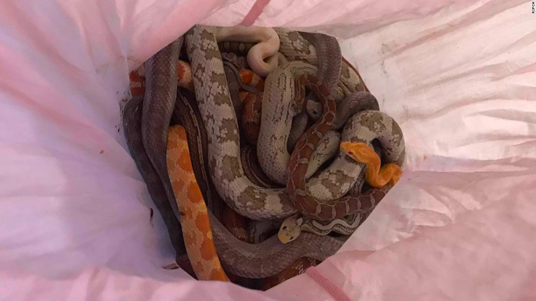 Pillowcases full of snakes keep getting dumped outside a UK fire station