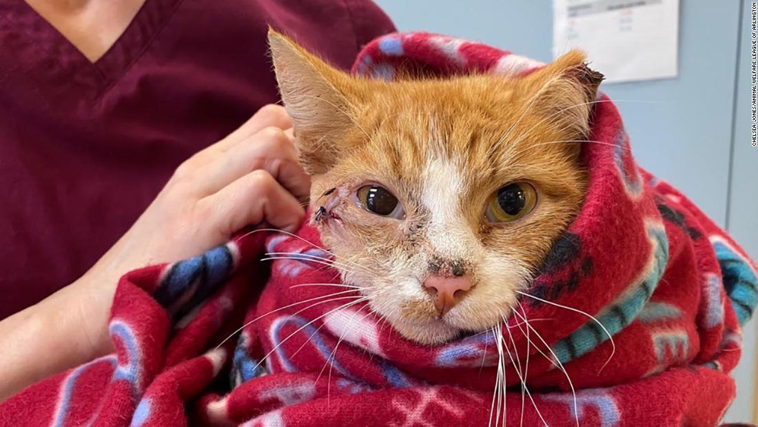 Eine Katze wurde gerettet, nachdem er durch den Kopf schoss mit einem Pfeil. Sein neuer name ist amor