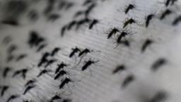 200219062941 dengue mosquito hp video