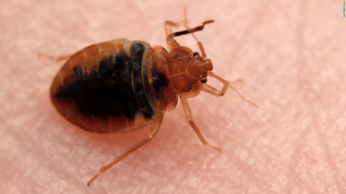 France launches bedbug hotline