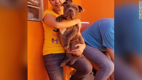 The pitbull is under the care of Refugio Xollin, a dog rescue group  in the Mexican state of Michoacan, where he will be adopted once he recovers.