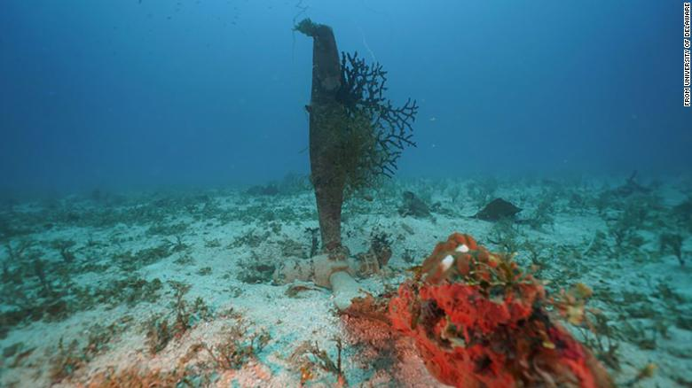 A propeller from one of the aircraft is now covered with coral in Micronesia's Chuuk State.