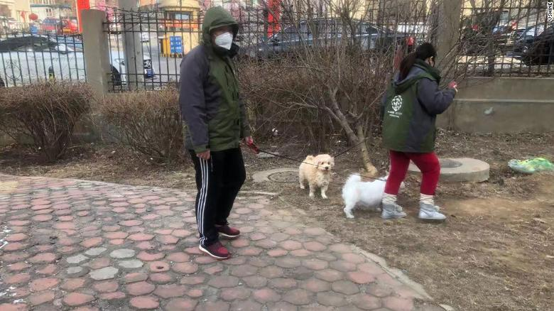 Members of Vshine, one of HSI's partner groups in China, walk two pet dogs that were left behind during the Wuhan coronavirus outbreak.