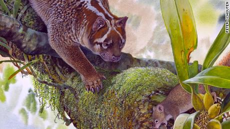 This tiny lion with teeth like bolt-cutters once roamed Australia