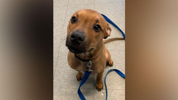 Larry, a puppy who appeared in a flyer on the pizza boxes, was adopted on Saturday.