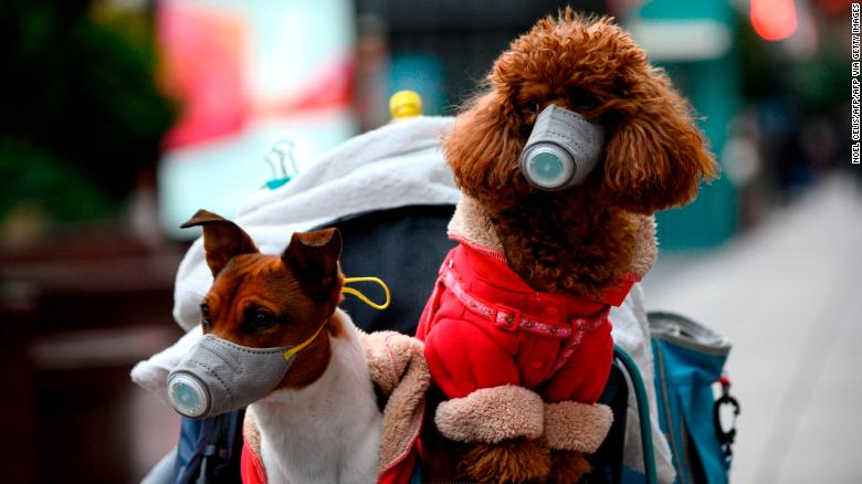 Dogs wearing masks are seen in a stroller in Shanghai on February 19, 2020.