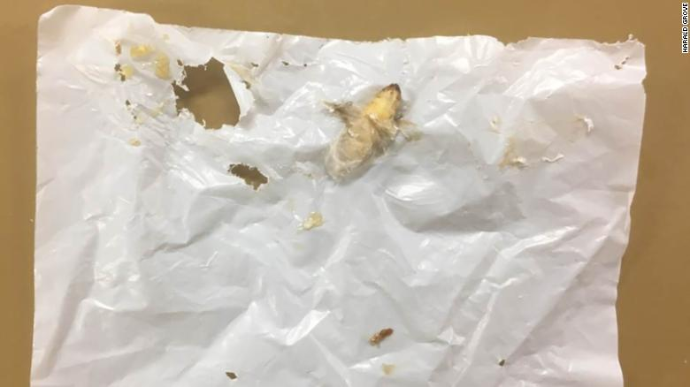 Sus bacterias intestinales descomponen el plástico, pero la propia oruga parece ser instrumental para el proceso.