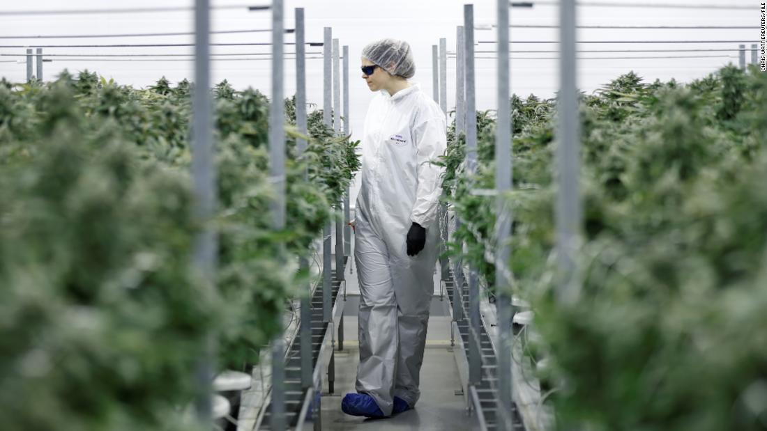 世界最大級の大麻の会社が閉鎖温室、敷設off百