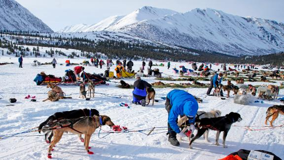 Health check: Veterinarians check over dogs at the Puntilla Lake checkpoint during the 2019 race.