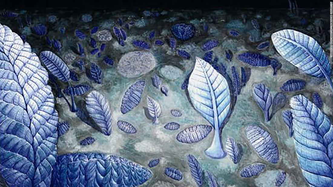 Prasejarah 'jaringan sosial' mungkin telah terhubung immobile makhluk laut