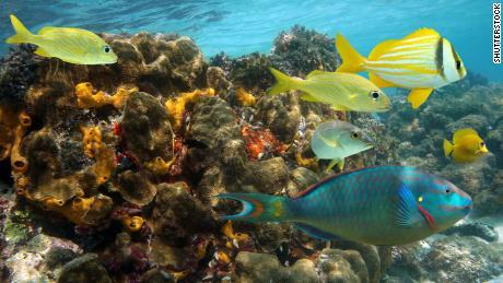 Reciful de corali din Jamaica a fost șters în doar 15 ani.