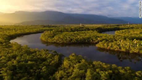 Unii oameni de știință susțin că pădurea Amazon este deja în fața punctului său de basculare.
