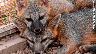 Millions of wild animals are killed or injured unintentionally each year in the US. Here's how you can help