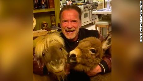 As celebrities issue their own coronavirus PSAs, Arnold Schwarzenegger and his donkey urge fans to stay home