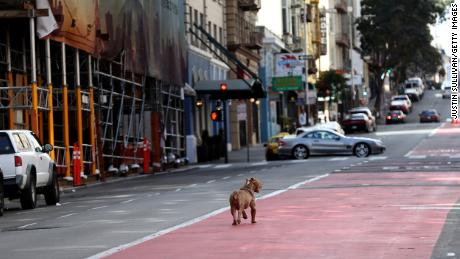 A dog roamed an almost empty Geary Boulevard in San Francisco Tuesday.