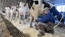 Industry associations representing farmers have said they're not too worried about the short-term food supply, but if their workers get sick, that could strain their operations. (Angela Weiss/AFP/Getty Images)