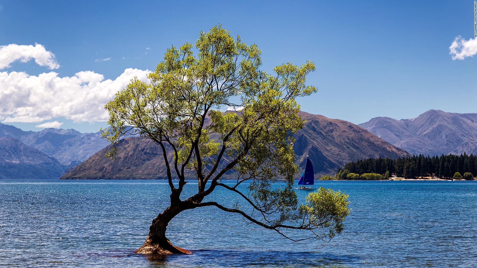 That Wanaka Tree,' New Zealand's most famous tree, vandalized | CNN Travel