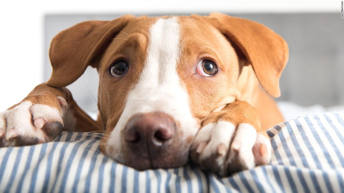 Tiere in Tierheime brauchen Pflegeeltern, die jetzt mehr als je zuvor