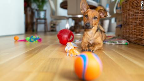 All the toys and treats you need to keep your pet happy at home (CNN Underscored)