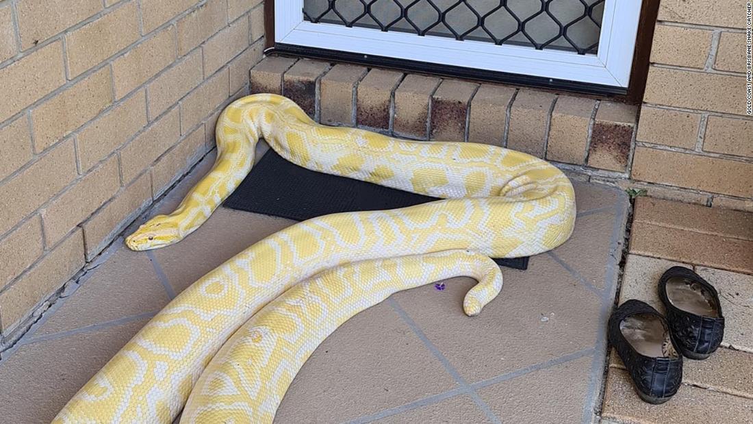 Frau findet riesige python auf der Veranda