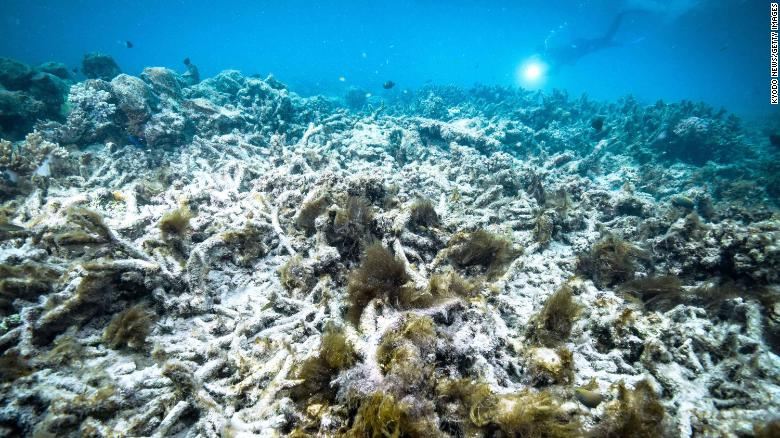 A file photo taken in October 2016 shows coral bleaching on the Great Barrier Reef in Australia. Scientists say that another mass bleaching event has occurred in 2020.