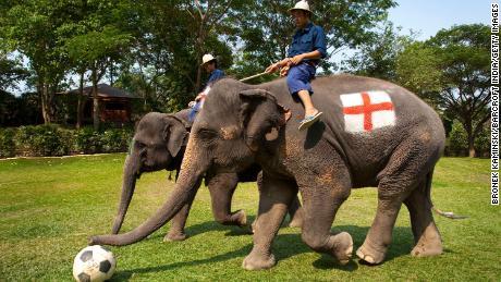 Thailand elephant park promises to scrap tourist rides because of virus