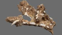 A cat bone found in the cave reveals the diversity of life in the area at that time.