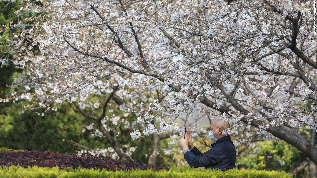 Άνθη της κερασιάς μετατρέψει τον ιό ground zero