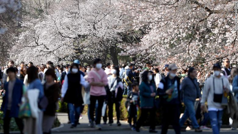 People flock to Tokyo city parks to view the blooming cherry blossoms on March 21.