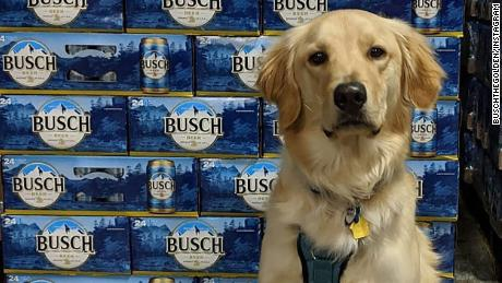 Busch wants you to adopt a dog.