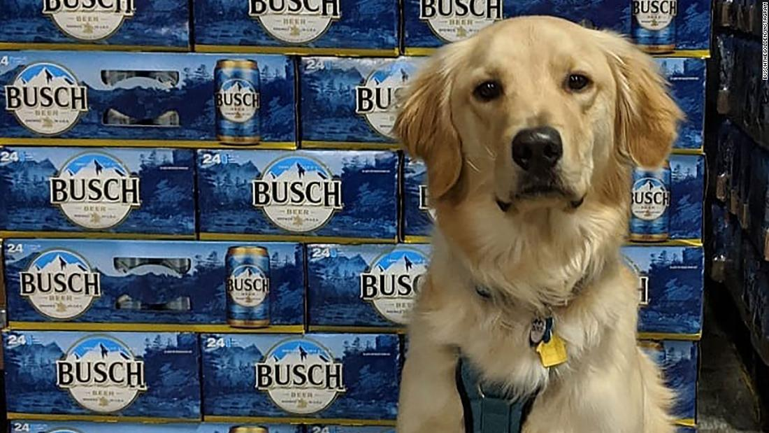 Busch δίνει 3 μηνών μπύρα σε ανθρώπους που εκδίδει ή προώθηση ενός σκύλου κατά τη διάρκεια του coronavirus κρίση