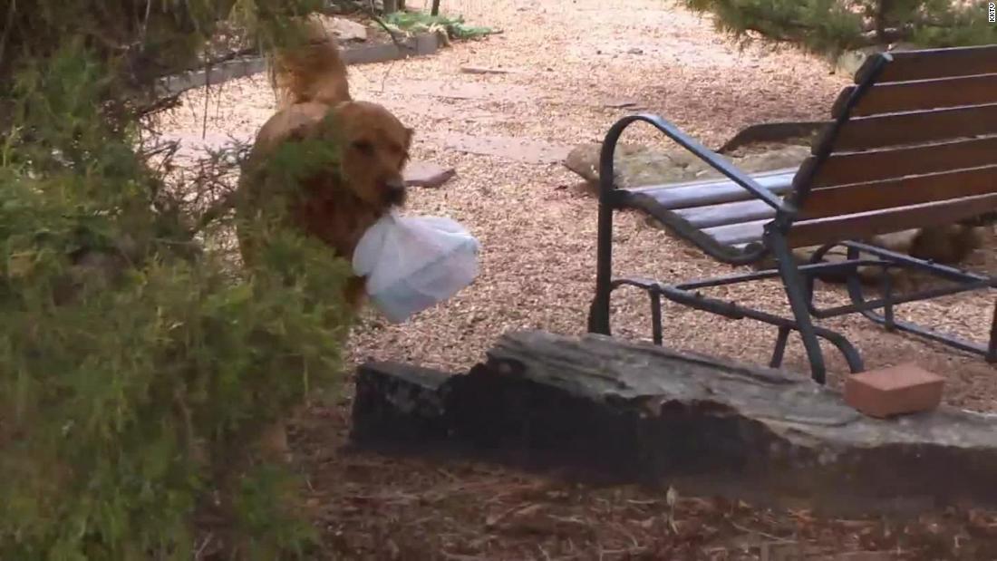 Σκύλος παραδίδει τα ψώνια γείτονα με προβλήματα υγείας